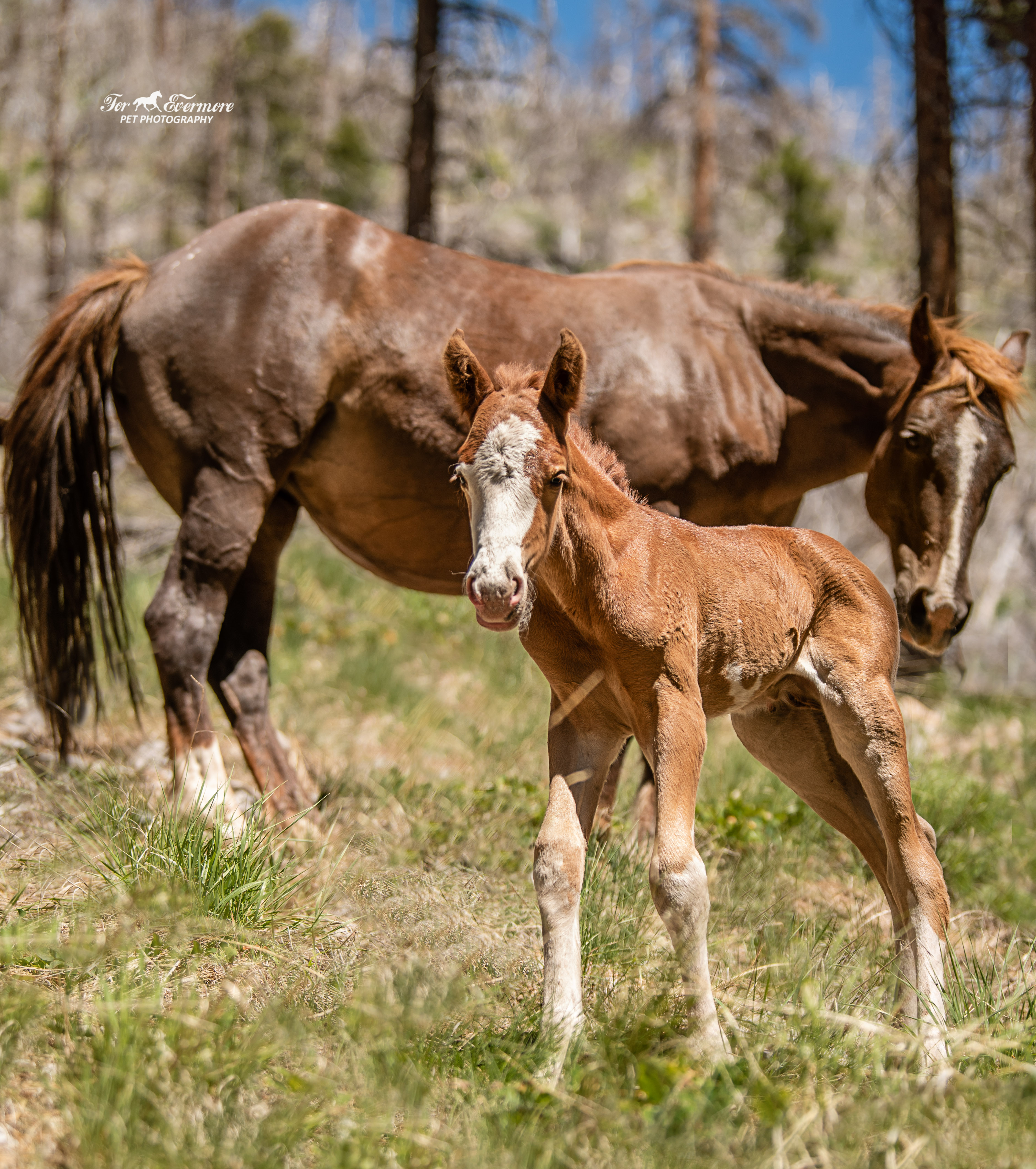 Five hours old wild colt I call Rory