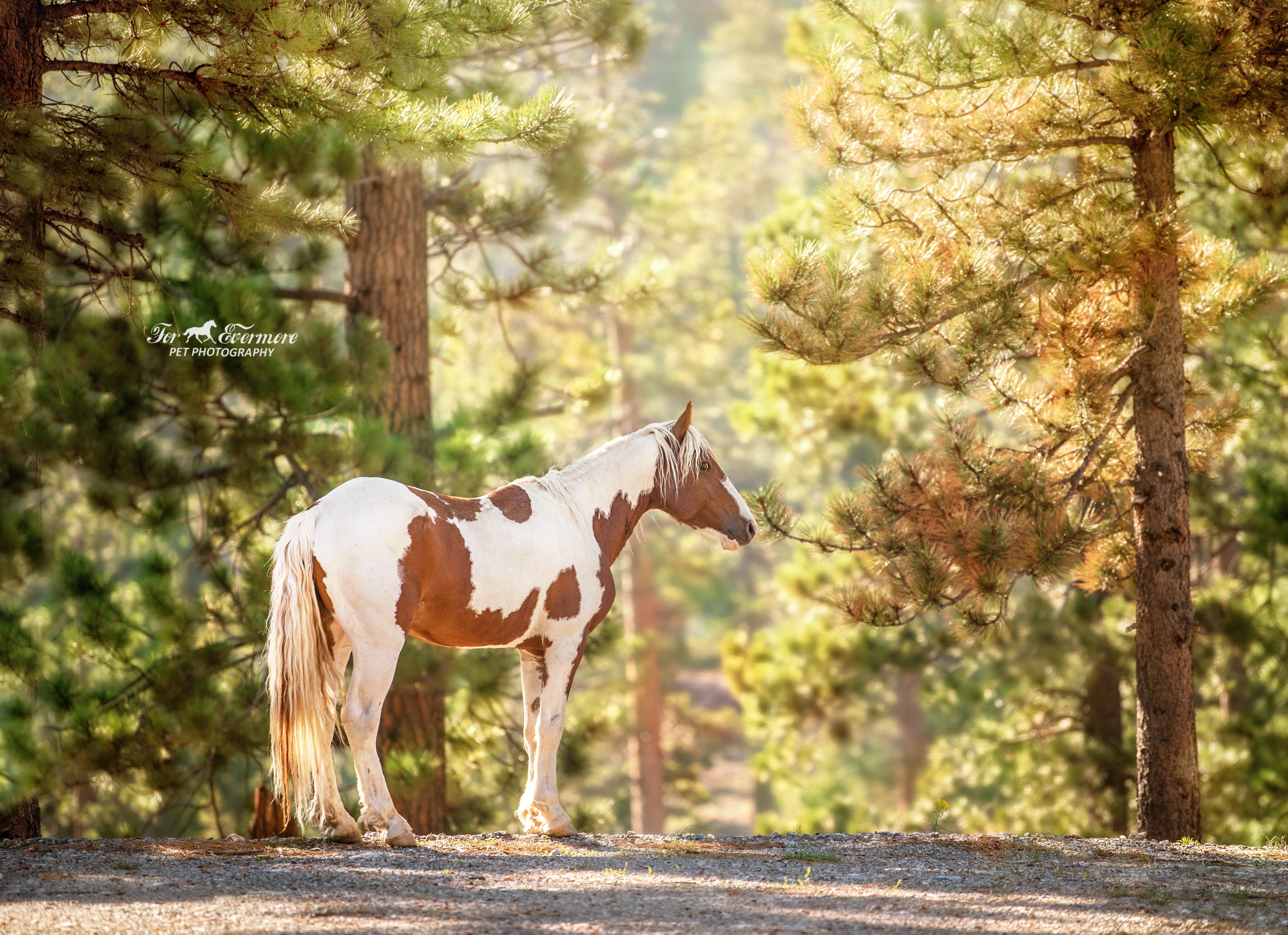 Beautiful paint stallion