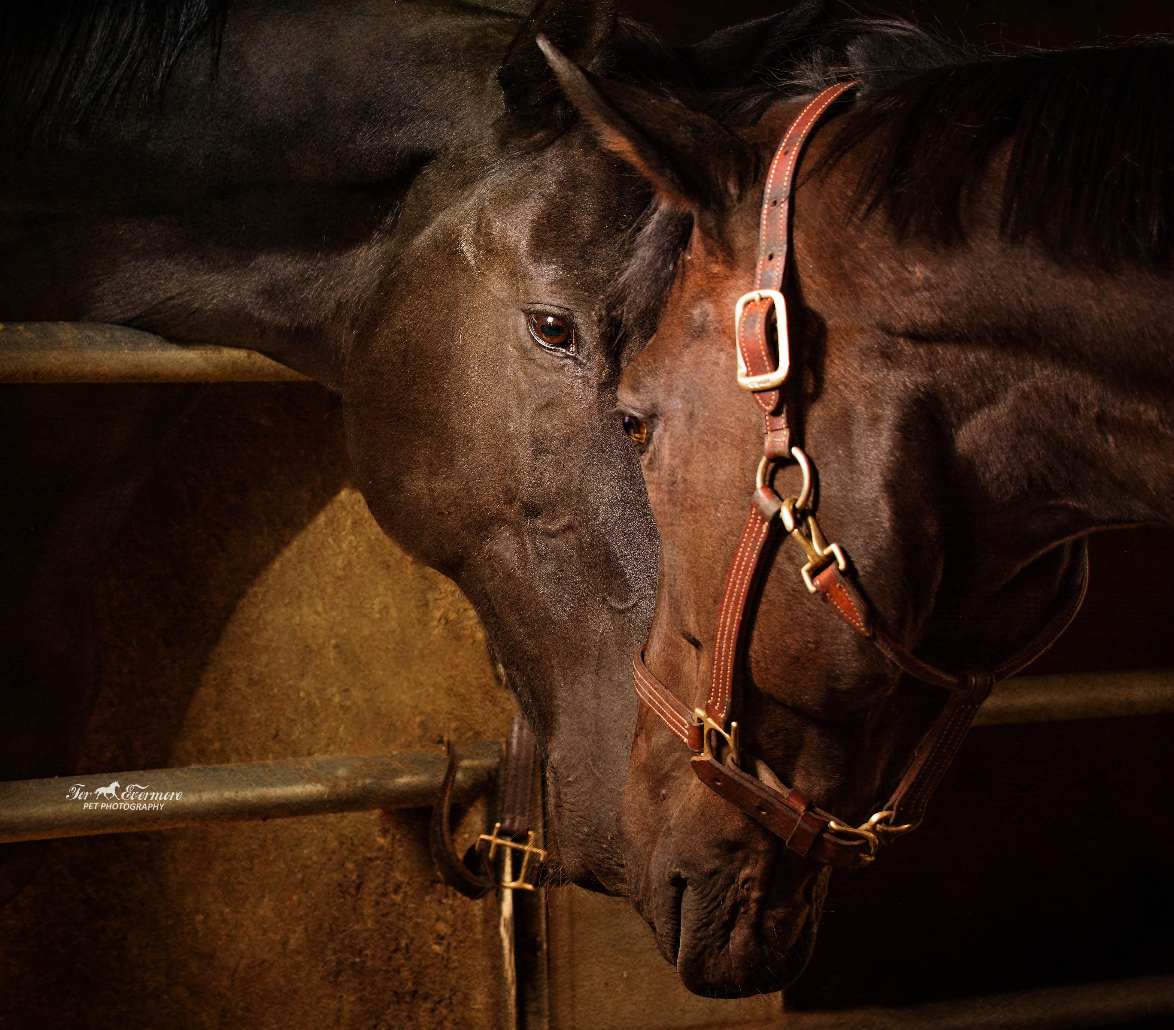 Horses sharing a special bond