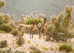 Mom and baby calf Elk