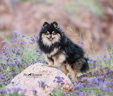pup-4831 fb.jpg