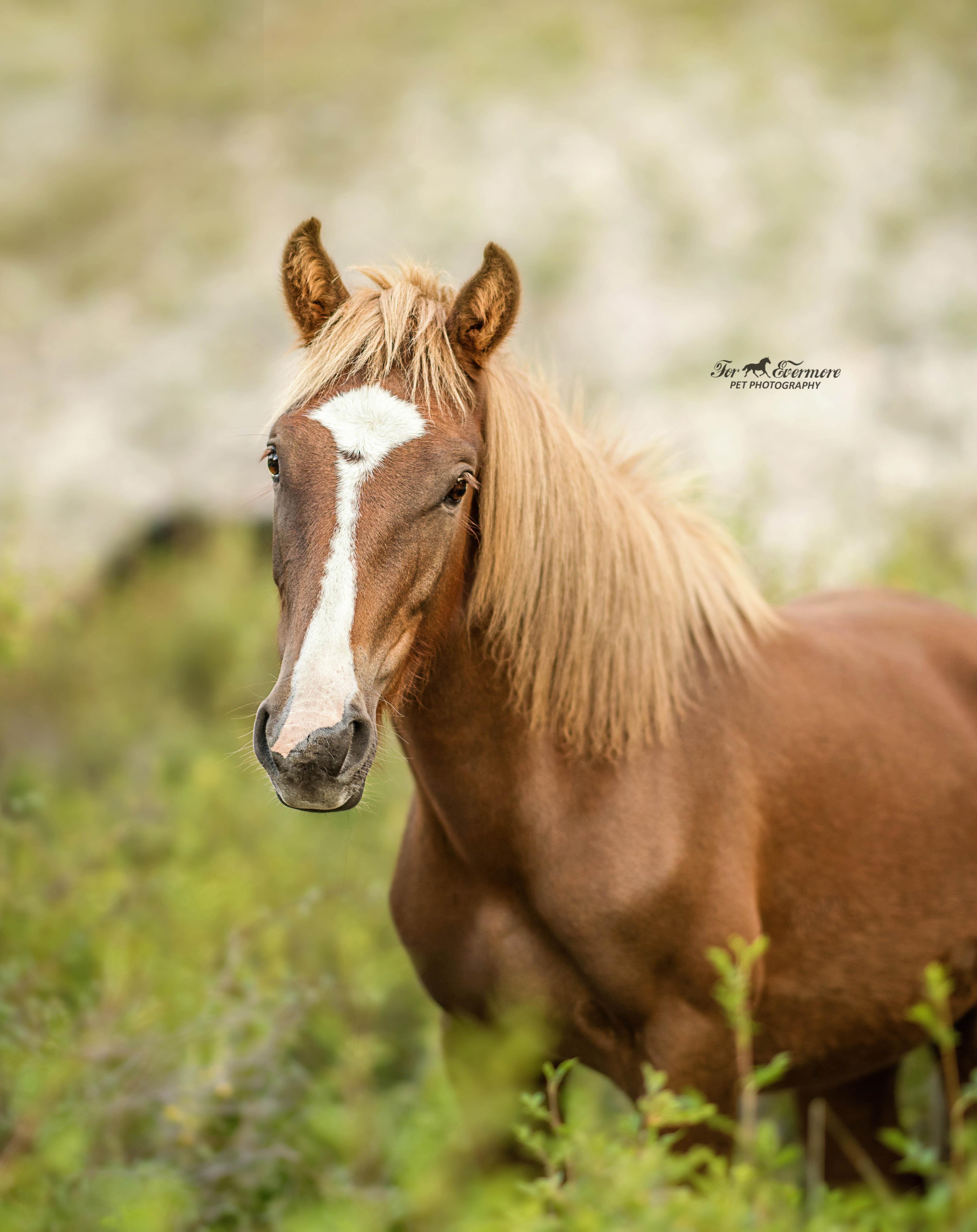 My favorite wild horse