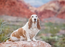 Daisy at Red Rock