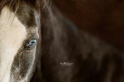 Blue eyed Pony Triston