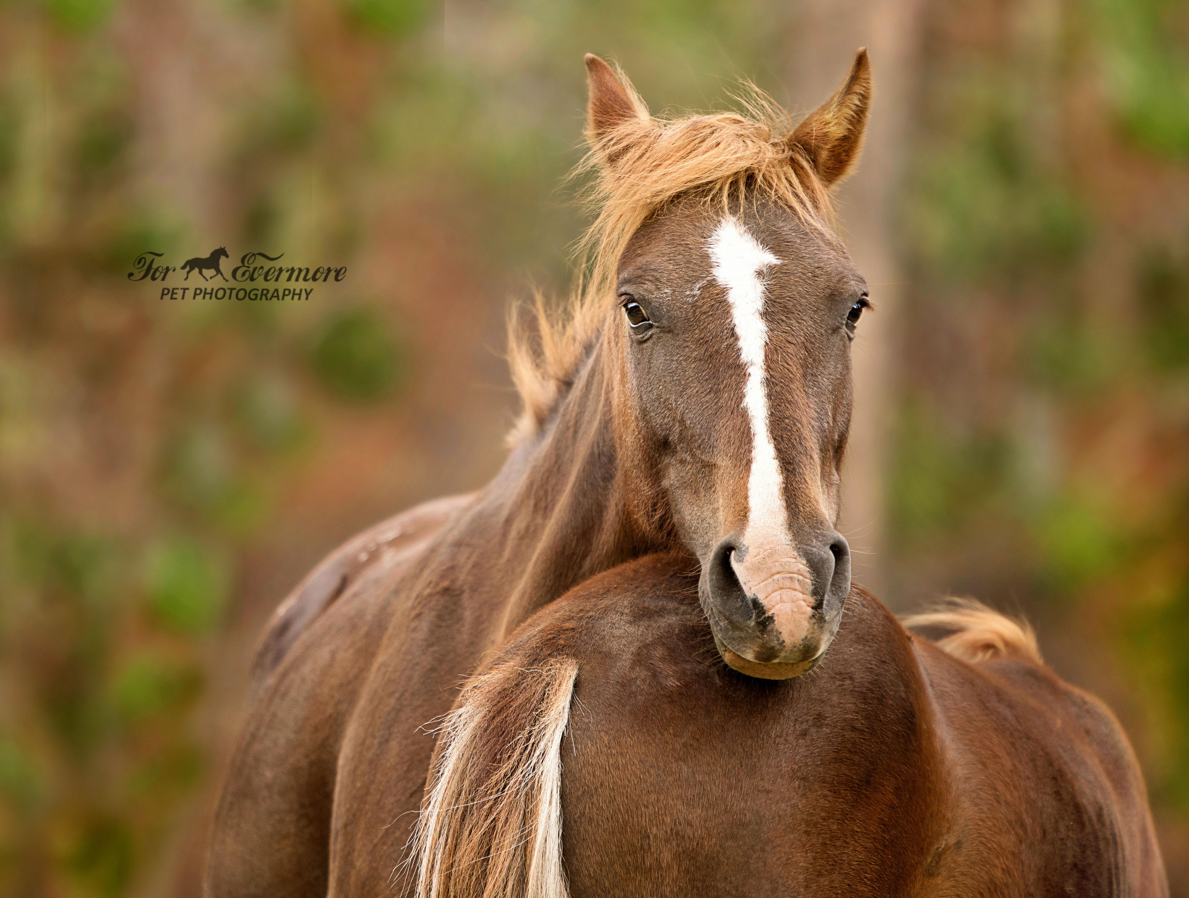 Wild horse mare