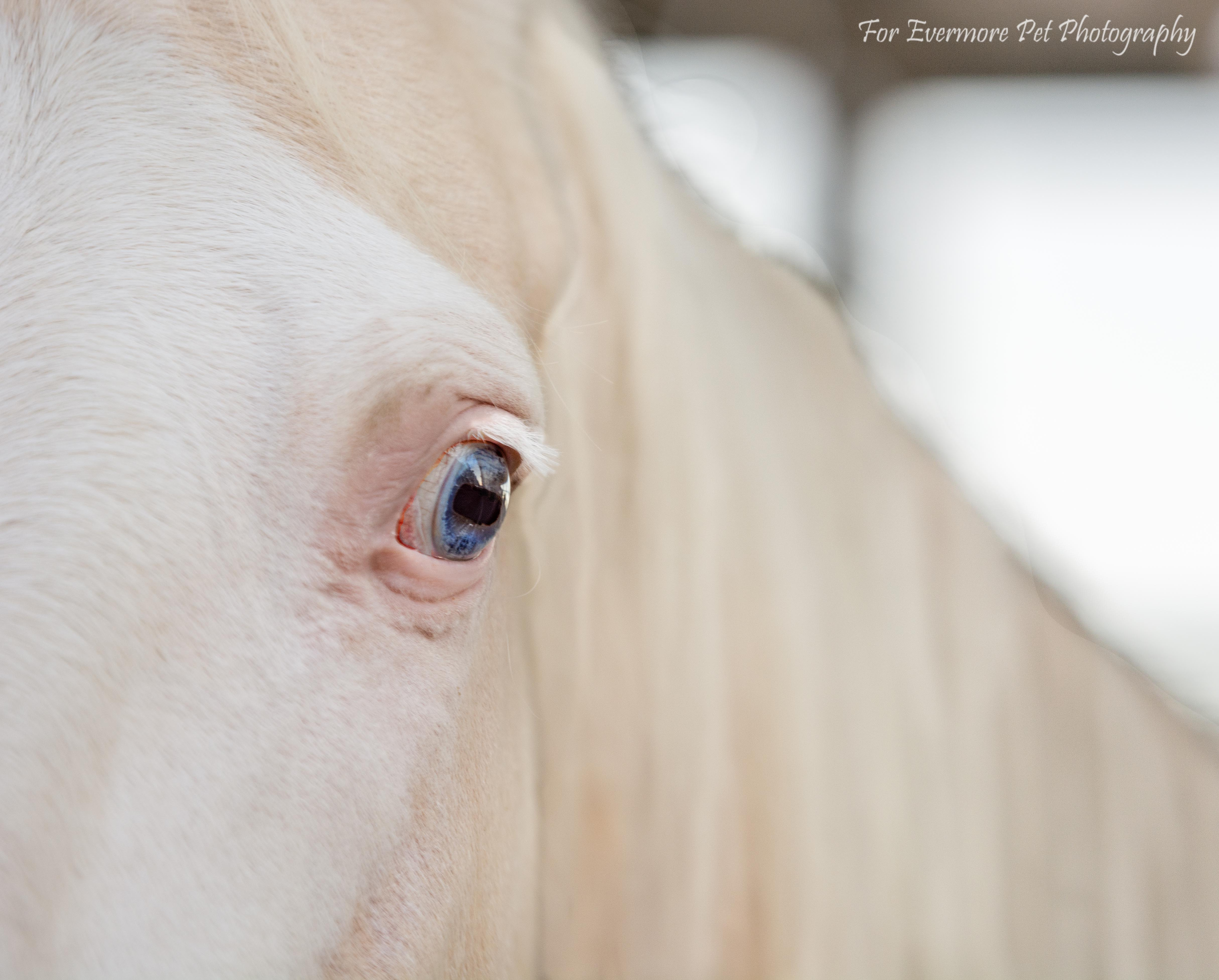 Sky albino horse
