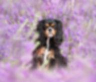 pupok-3174  fb.jpg