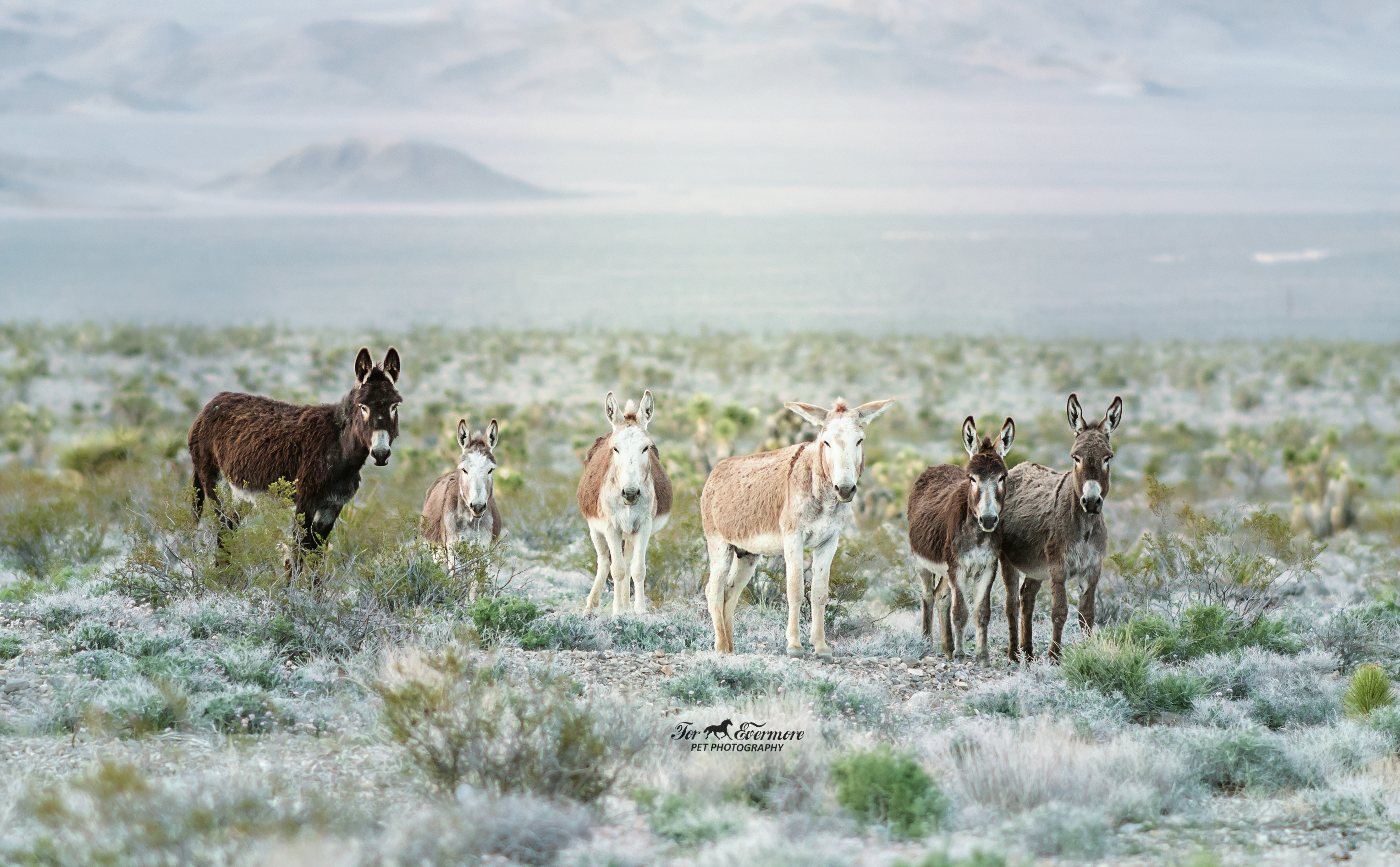 Six  wild Burros all in a row