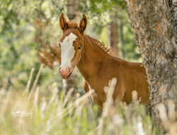 WIld colt Rory at 4 months old