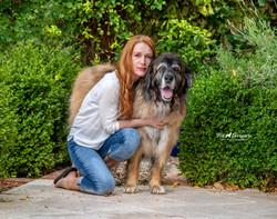 Maddie  the 11 year old Leonberger