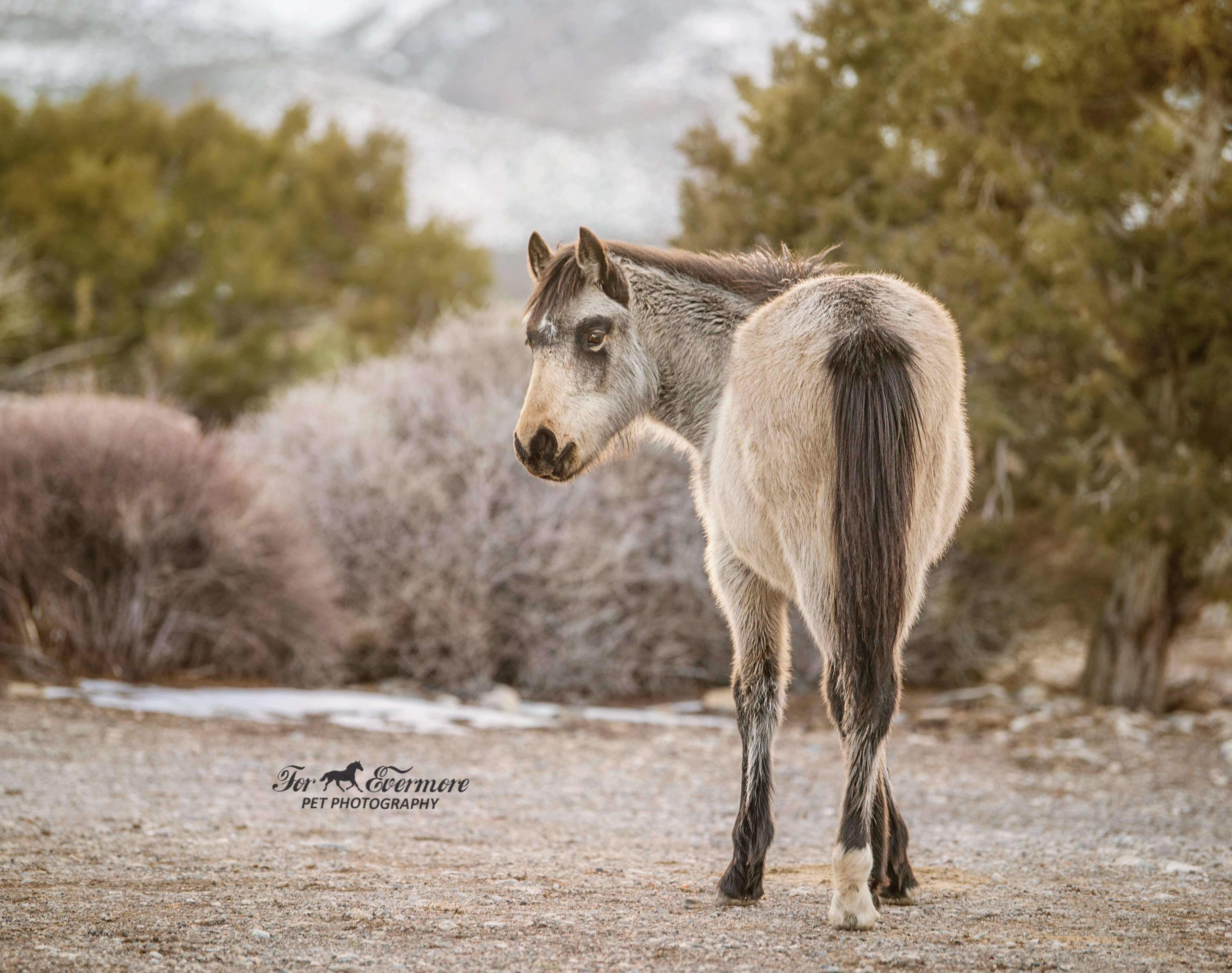 Young wild horse filly