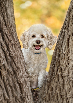 Happy Pugsley in a tree