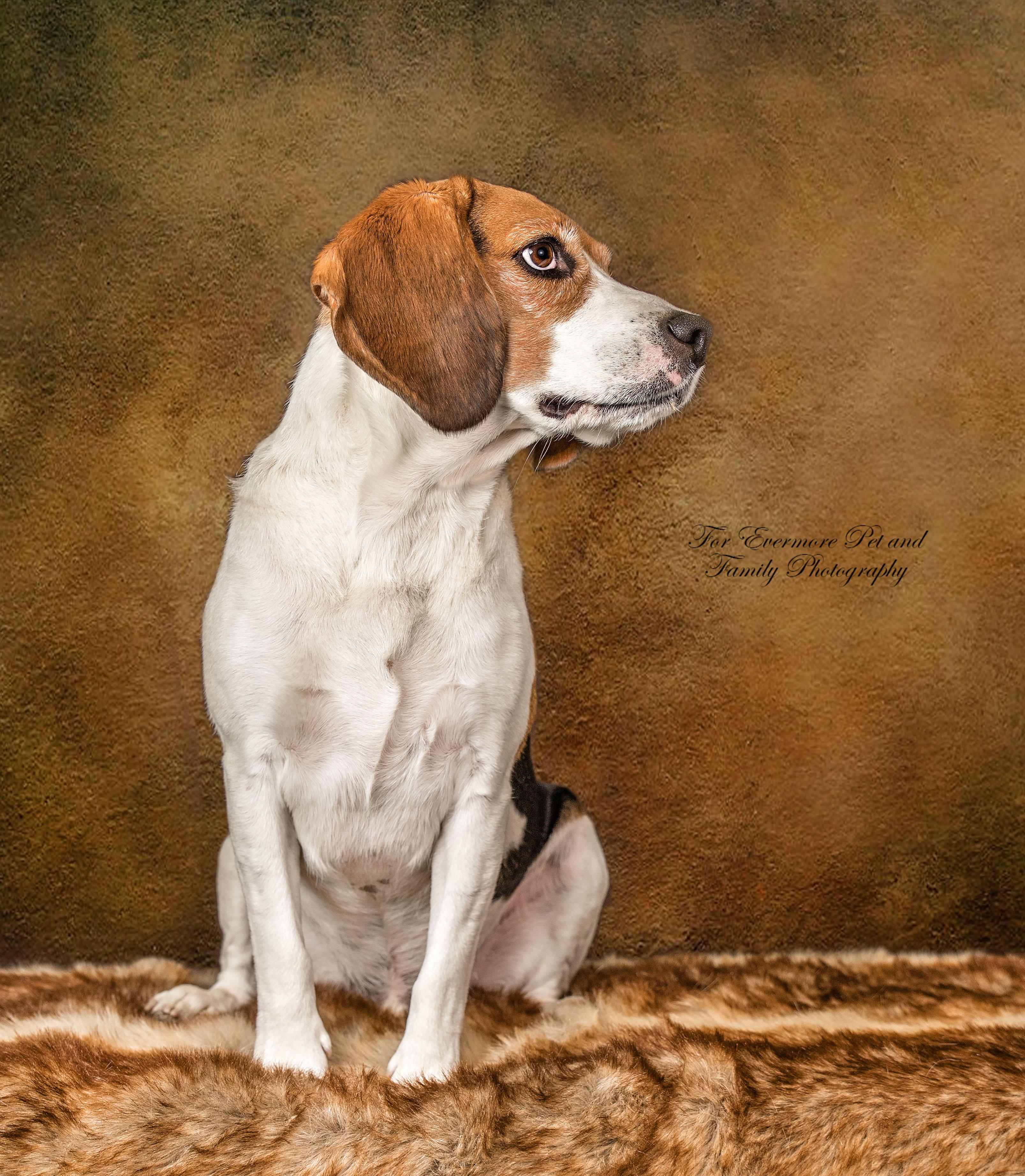 Jake the Beagle