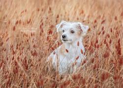 Daisy in the meadow