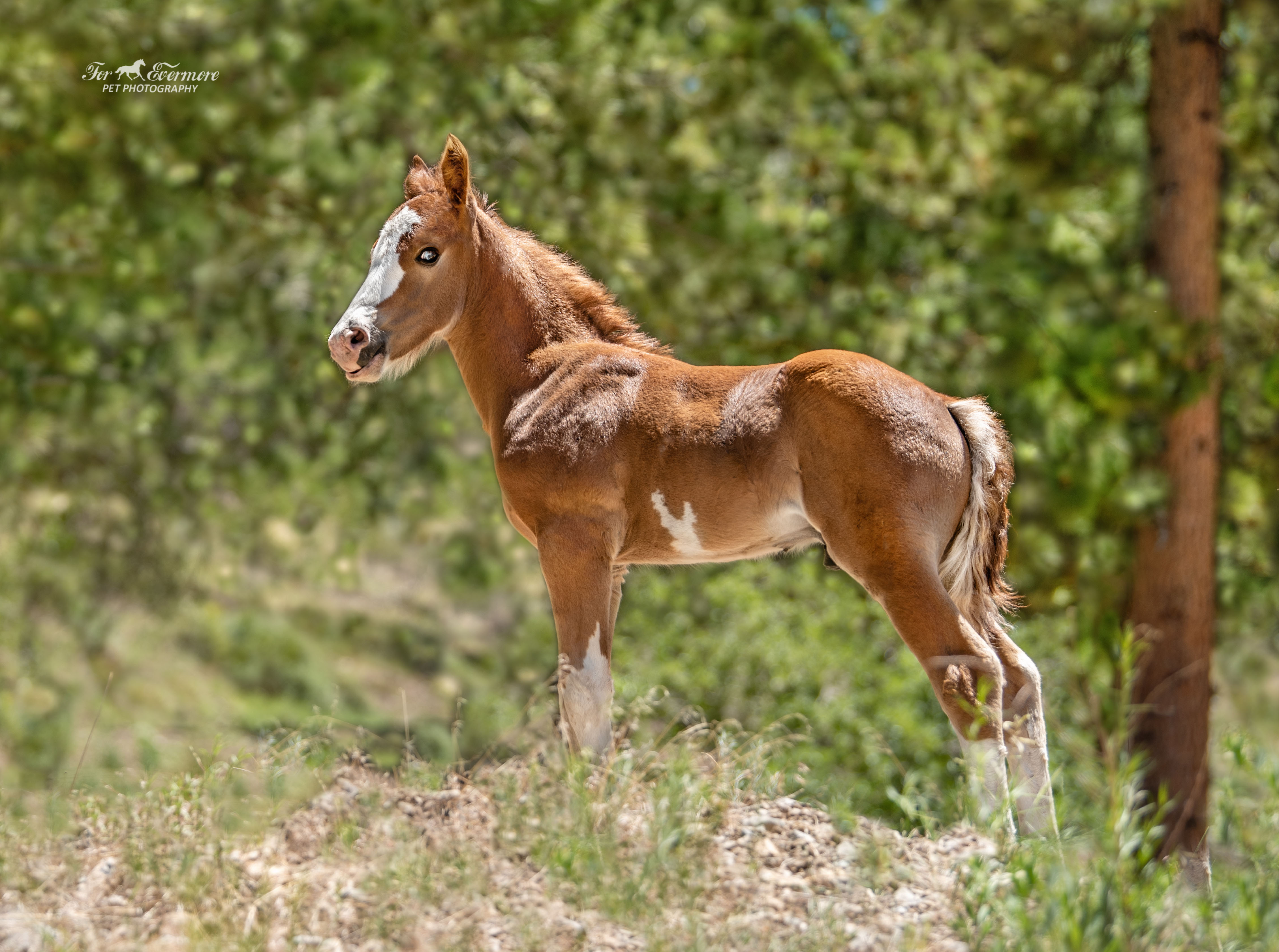 Wild colt Rory at one month old