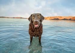 Gracie at the Lake