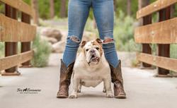 Ruger the Bulldog