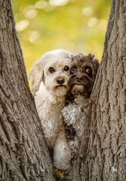Frankie and Bailey