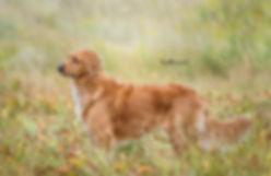 pup-7932 crop 2.jpg