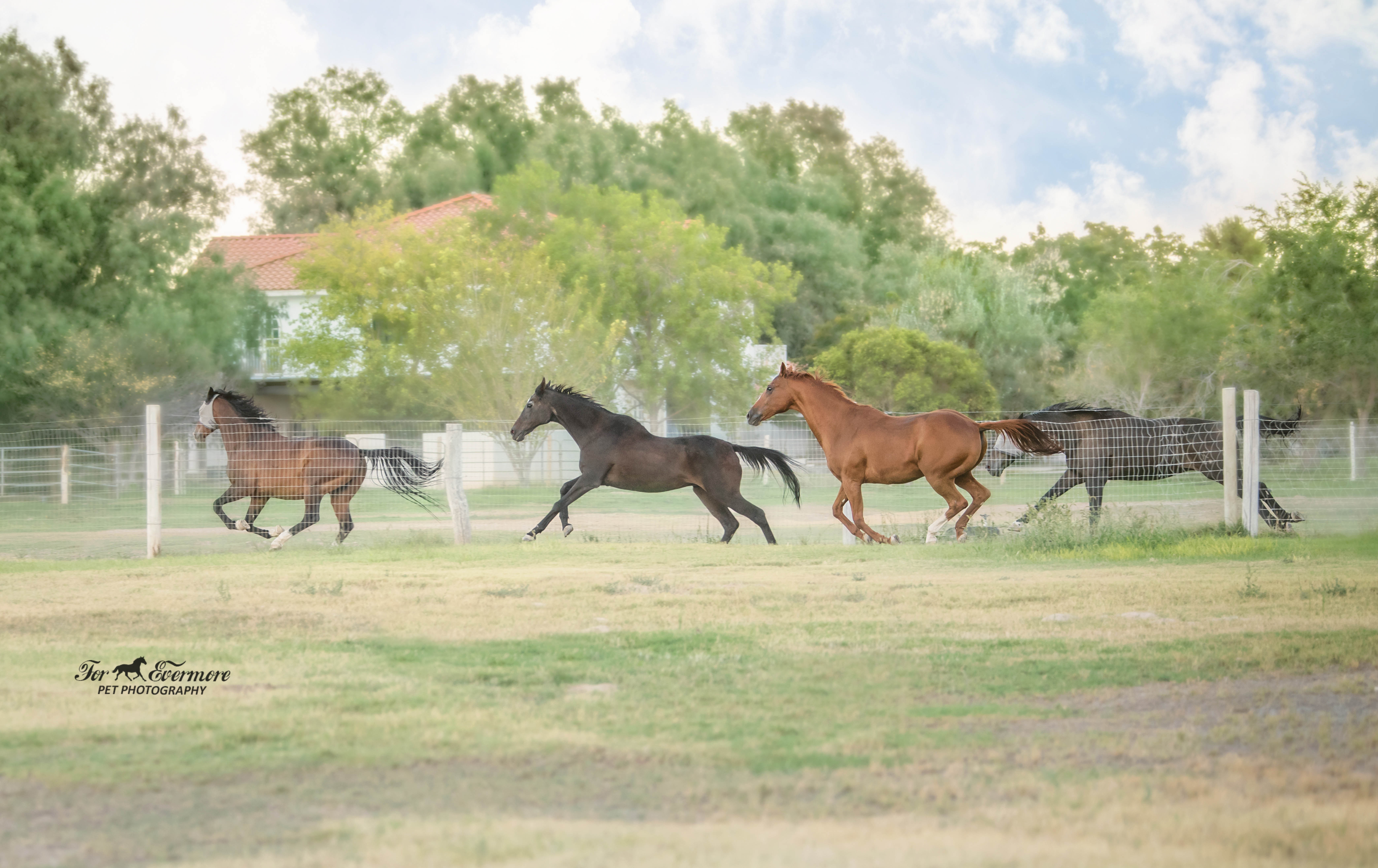 LEAN Rescue horses