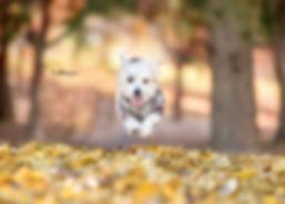pup-5468  crop.jpg