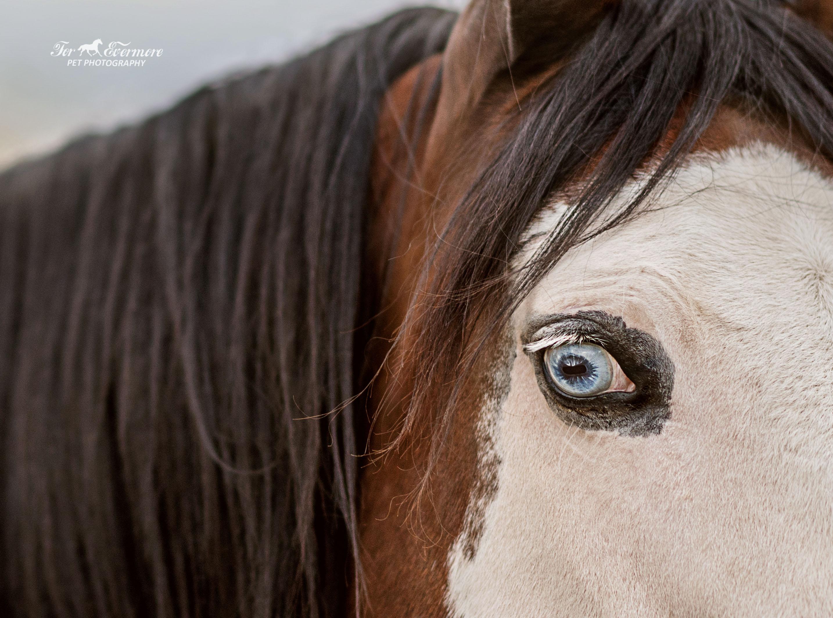 Frankie's stunning blue eye