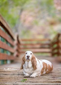 Daisy on the boardwalk