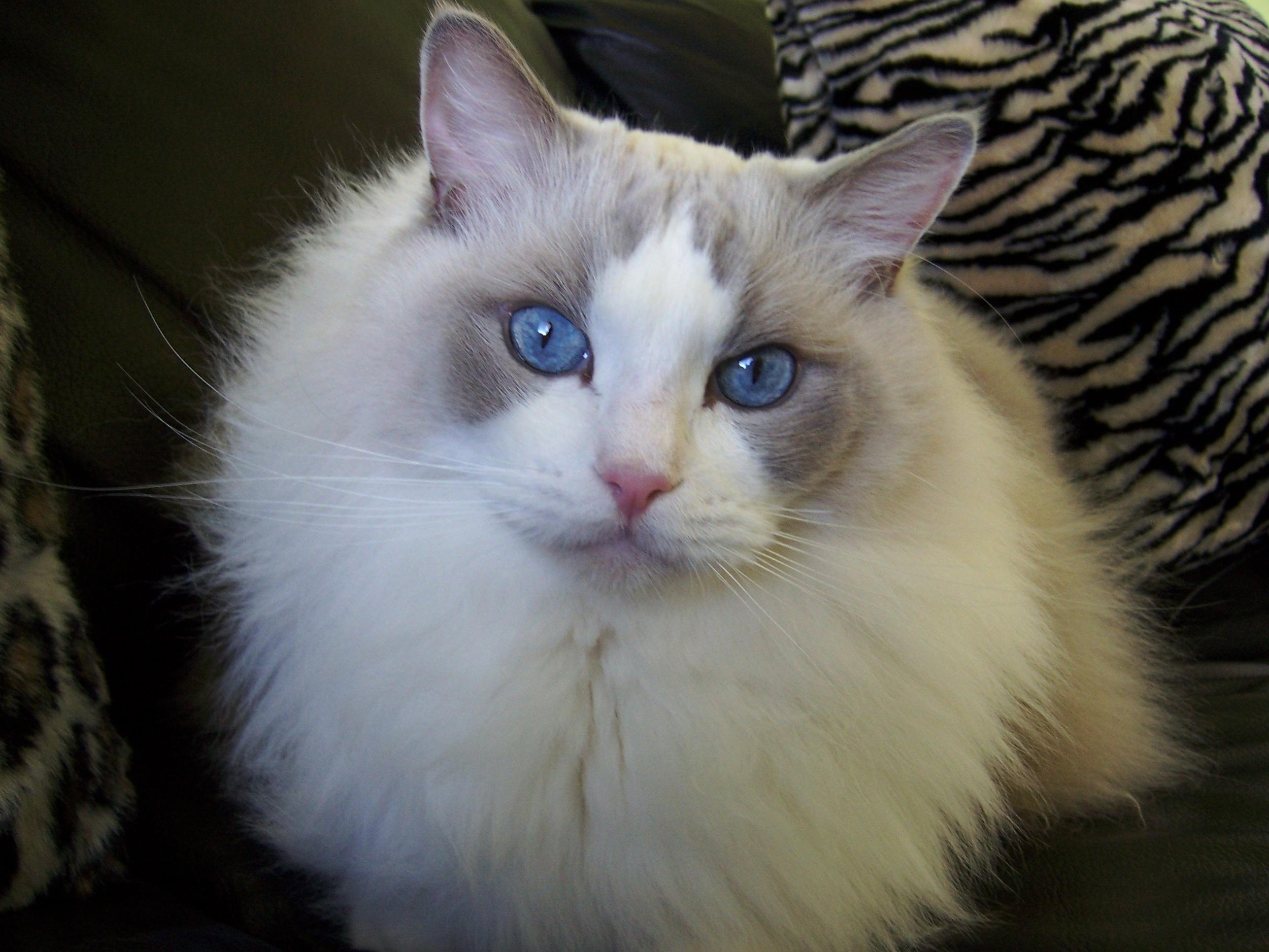 Milo  2001- 2011