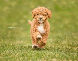 Run Murphy run!