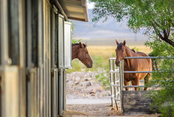 Las Vegas Ranch
