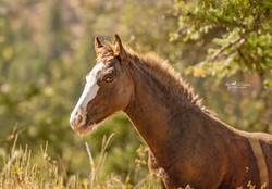 Wild colt Rory at 5 months old