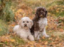 pups -4765 fb.jpg