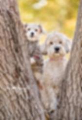 pup ww-5970  crop2.jpg