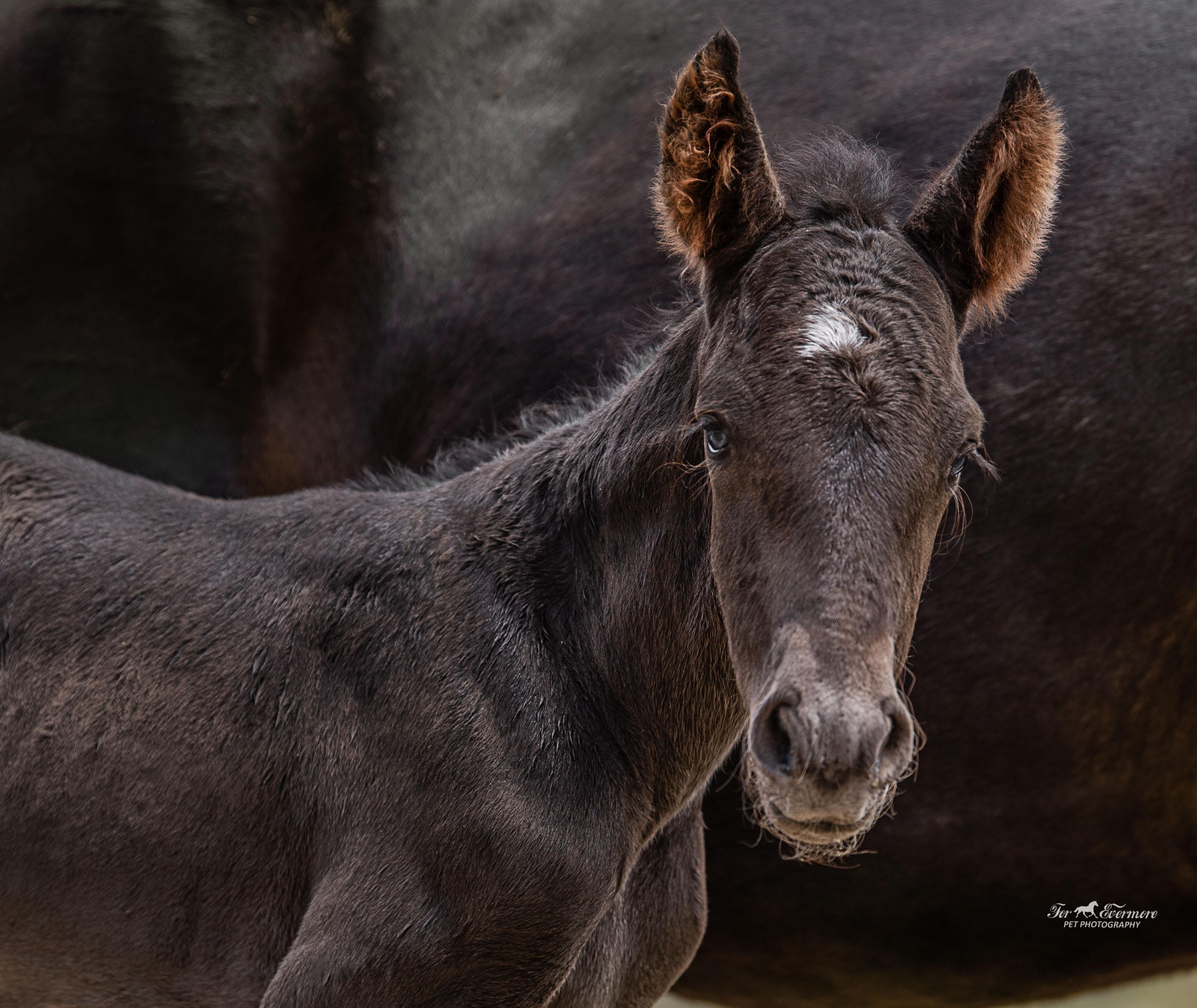 Blue eyed  few hours old colt