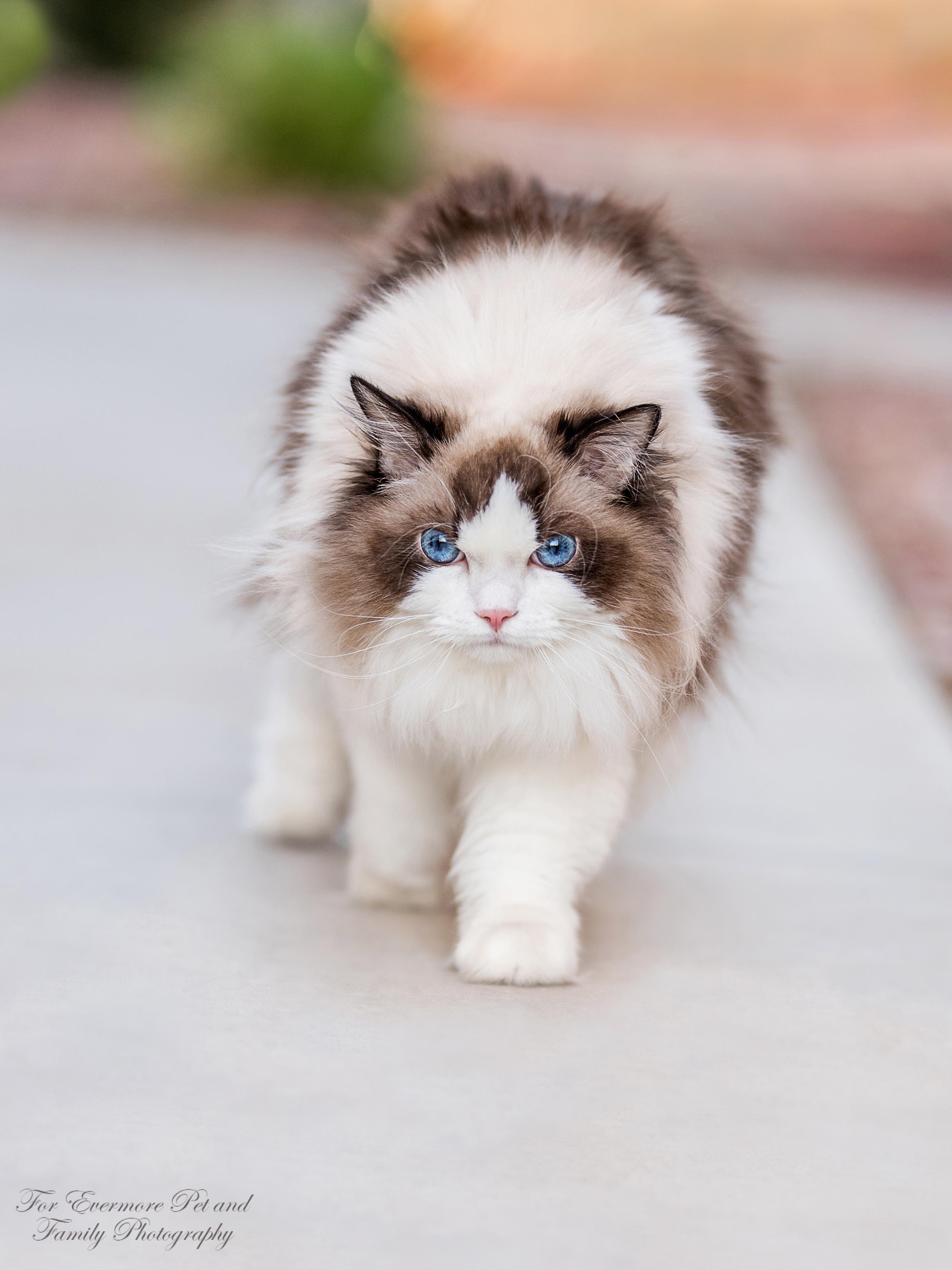 Meko taking a stroll