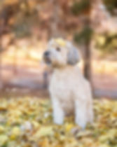 pup -5529 fb.jpg