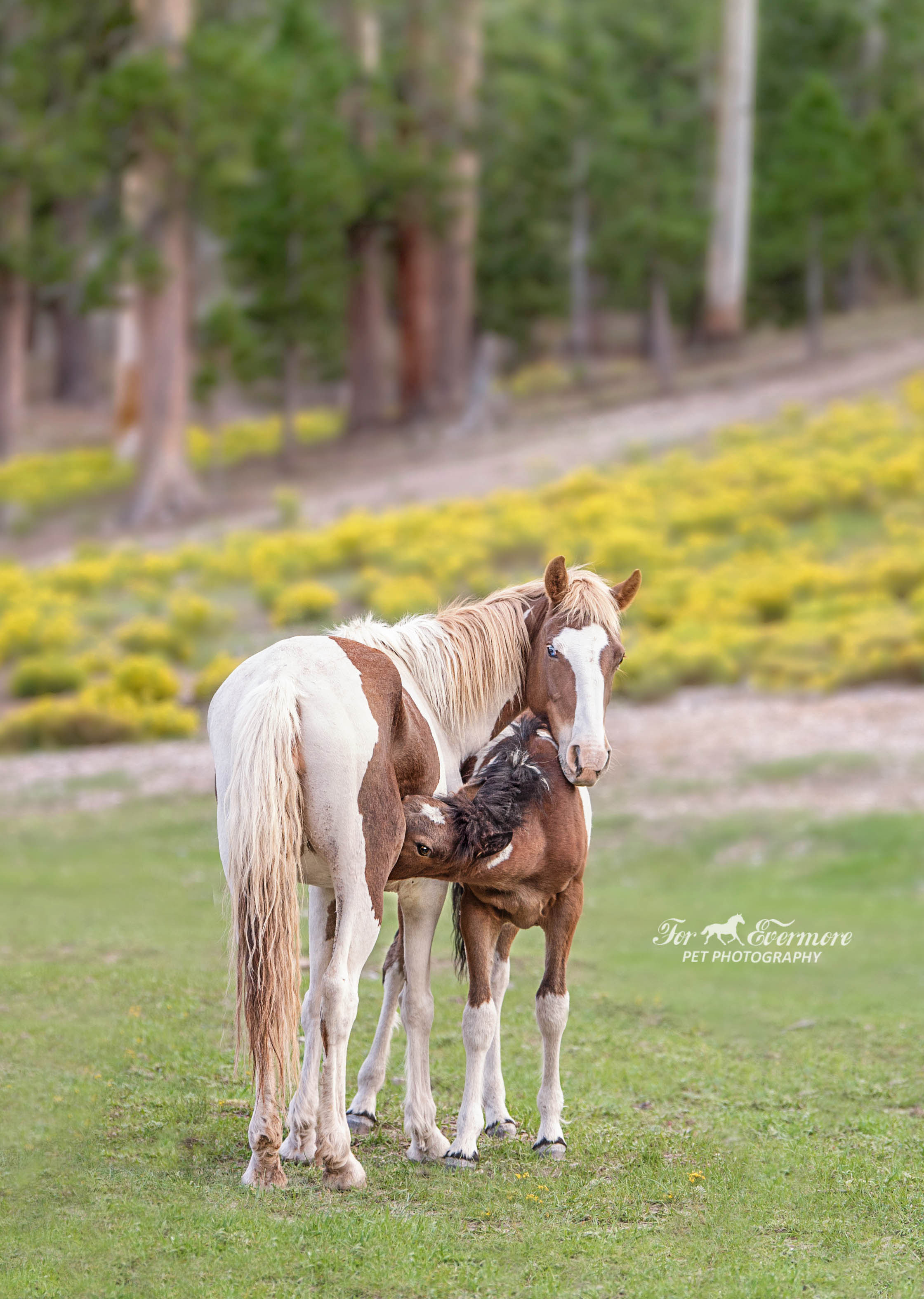 Wild horse and her baby