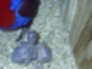 Anjewlies 2 Bubs.jpg