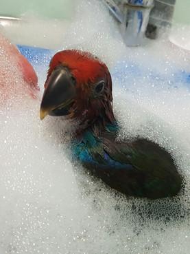 Birdie bathtime