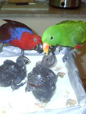 Jewlie and Kumar feed bubys