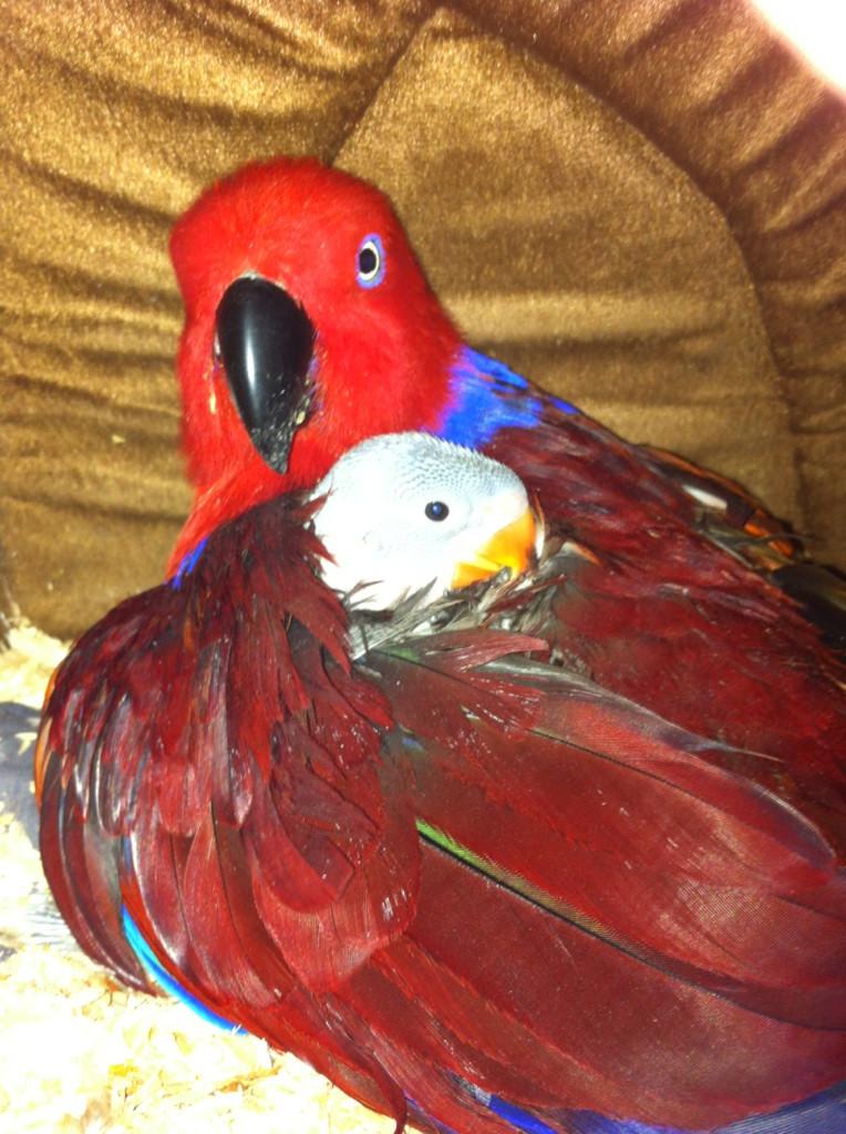Cleo and bub