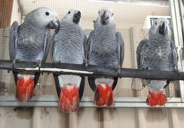 Look at us! We can perch