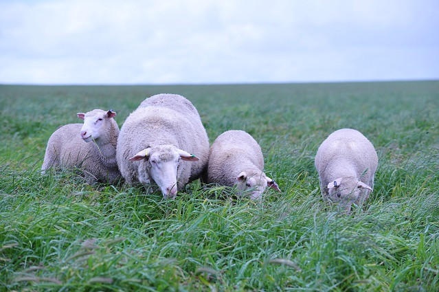 Triplets - Avg 390g per day each - birth to weaning