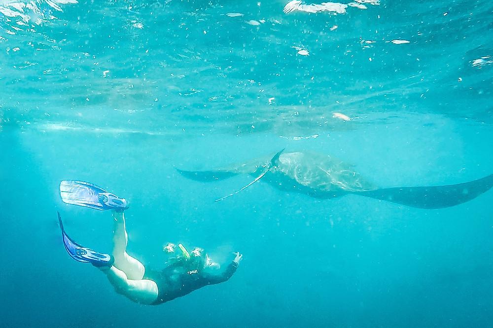 Marine Conservation volunteering, Manta Rays Mexico