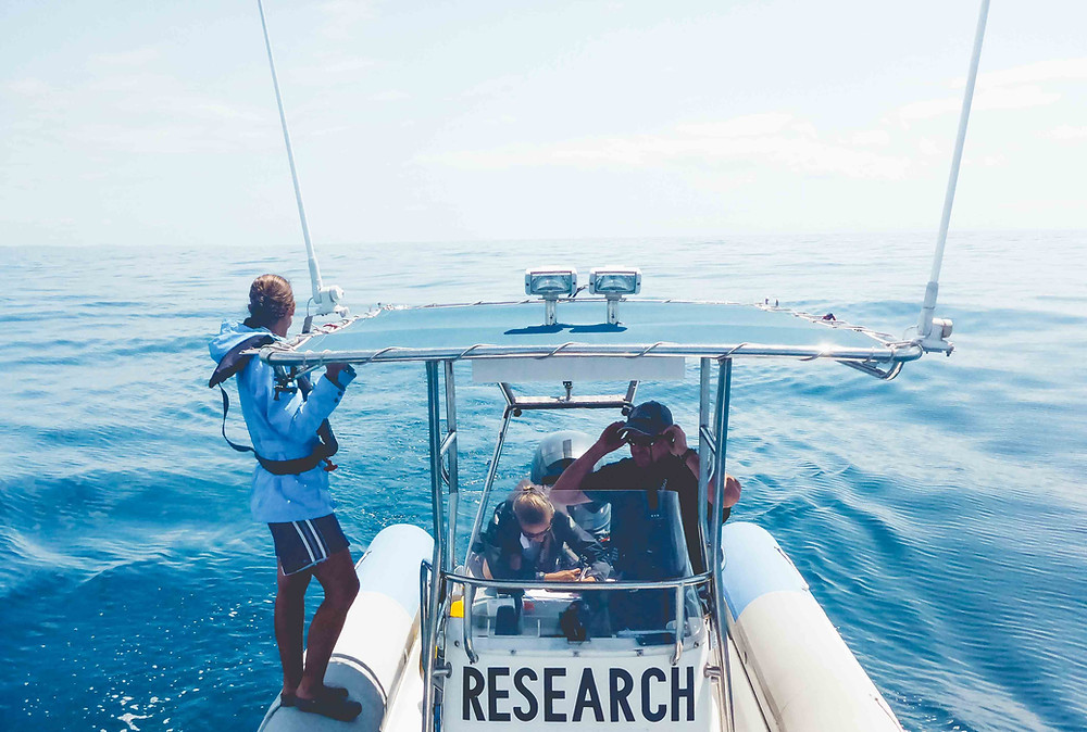Marine Conservation volunteering, Humpback Whales Australia
