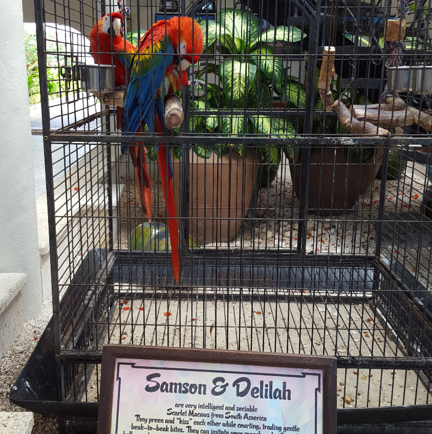 Be sure to stop and say hi to Samson & Delilah, the resident Scarlet Macaws, in the Caribbean Village lobby.