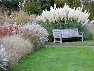 Caring For Your Ornamental Grasses
