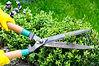 scissors-cutting-bushes.jpg