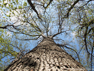 Barking up the right tree - Why it's smart to add trees to your landscape plan