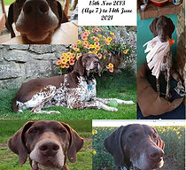 Pictures of a Dog
